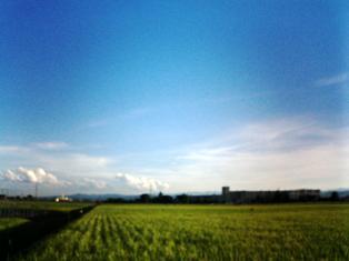 countory farm
