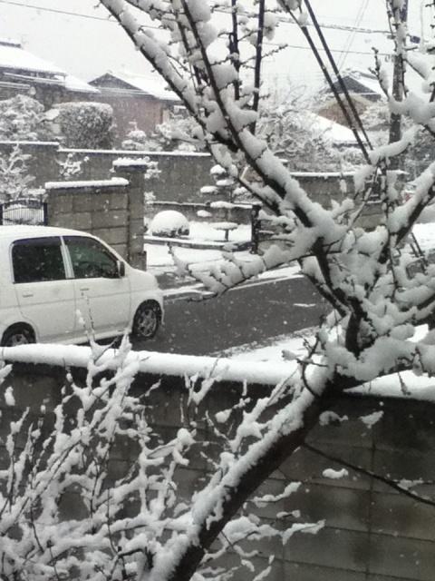 2012/2/29 snow